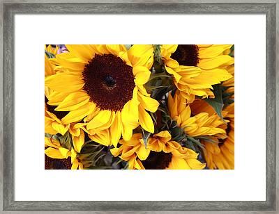 Framed Print featuring the photograph Sunflowers by Dora Sofia Caputo Photographic Art and Design