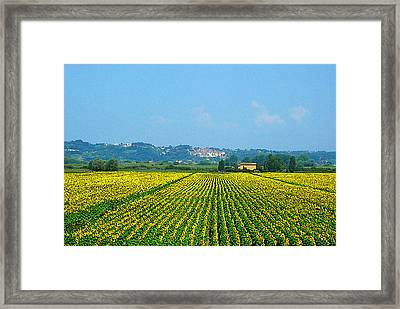 Sunflowers Field Of Tuscany Italy Framed Print by Irina Sztukowski