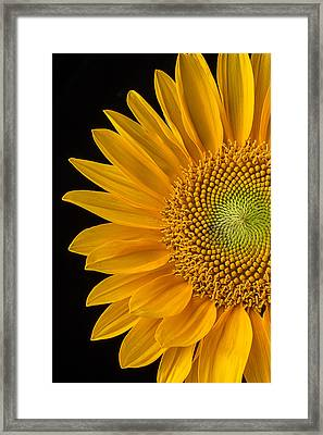 Sunflower's Golden Petals Framed Print by Garry Gay
