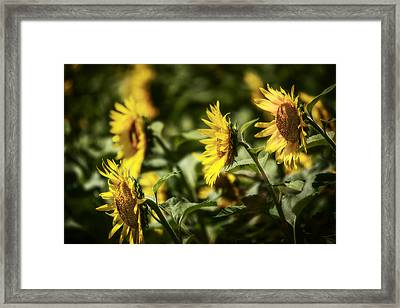 Framed Print featuring the photograph Sunflowers In The Wind by Steven Sparks