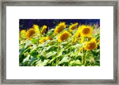 Sunflowers In Abstract Framed Print by Caroline Stella