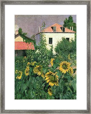 Sunflowers In The Garden At Petit Gennevilliers  Framed Print