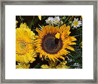 Sunflowers Framed Print by Mark Orr