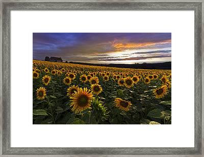 Sunflowers Oil Painting Framed Print by Debra and Dave Vanderlaan