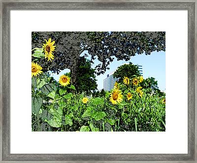 Sunflowers Outside Ford Motor Company Headquarters In Dearborn Michigan Framed Print