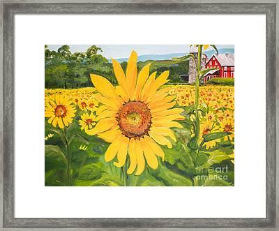 Sunflowers - Red Barn - Pennsylvania Framed Print