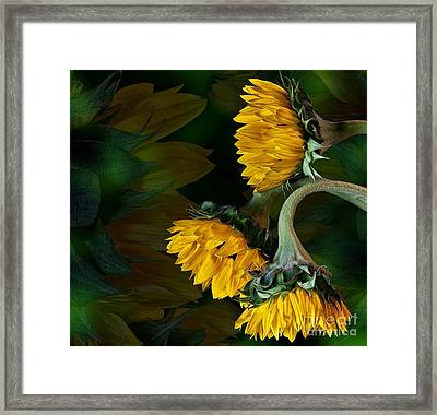Framed Print featuring the photograph Sunflowers by Shirley Mangini