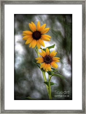 Sunflowers  Framed Print by Saija  Lehtonen
