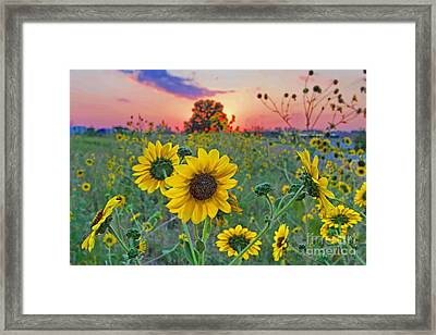 Sunflowers Sunset Framed Print