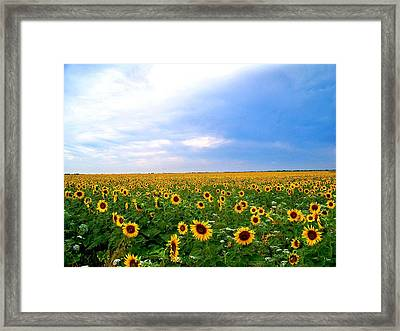 Sunflowers Framed Print by Thomas Leon