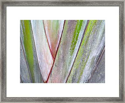 Sunken Gardens Abstract 4 Framed Print by Maria Huntley