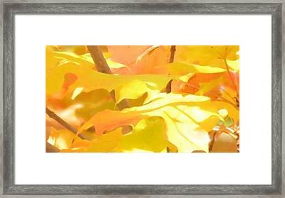 Sunkissed Framed Print by Anjali Vaidya