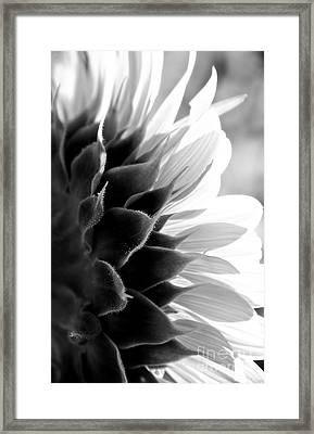 Sunkissed In Black And White Framed Print by Lee Craig