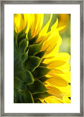 Sunkissed Framed Print by Lee Craig