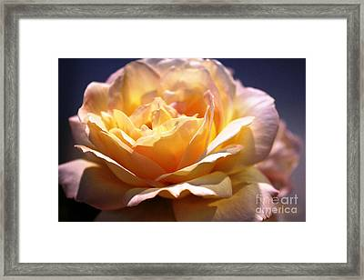 Sunkissed Rose Framed Print by Judy Palkimas