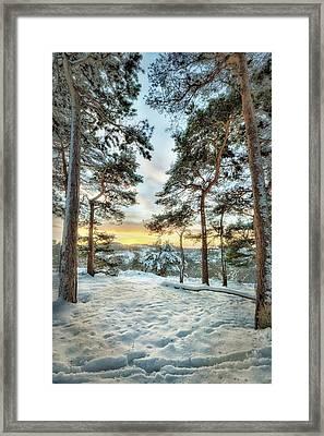 Sunkissed Trees Framed Print