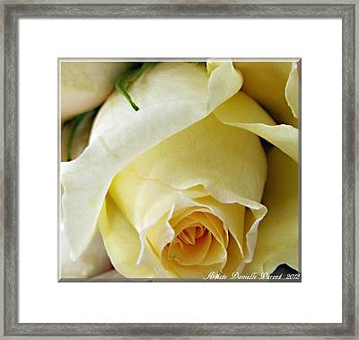 Sunkissed Yellow Rose Framed Print by Danielle  Parent