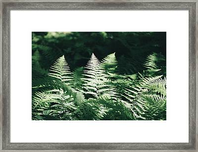Framed Print featuring the photograph Sunlight And Shadows-algonquin Ferns by David Porteus