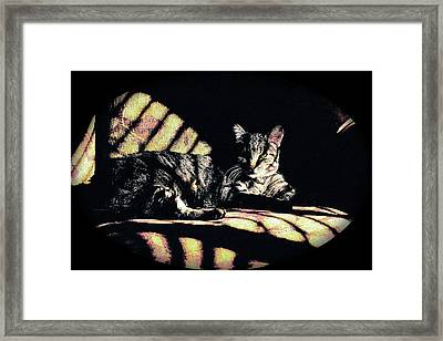 Sunlight And Whiskers Framed Print by Ronald Hurst