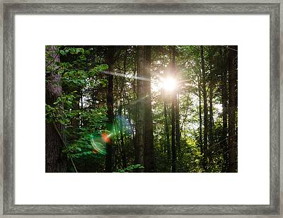 Sunlight Forest Framed Print by Pati Photography
