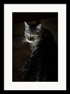 Felis Domesticus Framed Prints