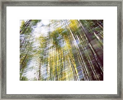 Sunlight In Bamboo Forest Framed Print by Panoramic Images