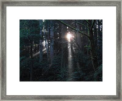 Sunlight In The Forest Framed Print by Karen Molenaar Terrell