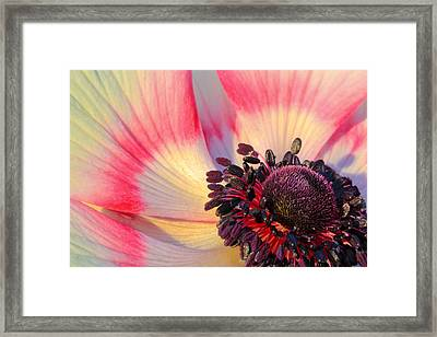 Sunlight Just Right Framed Print