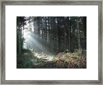 Framed Print featuring the photograph Sunlight On Cannock Chase by Jean Walker