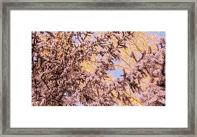 Sunlight On Christmas Tree Framed Print by Zina Stromberg
