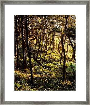 Sunlight On Fern Plants Growing In Framed Print by Panoramic Images