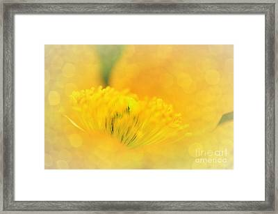 Sunlight On Poppy Abstract Framed Print by Kaye Menner