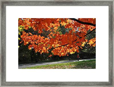 Framed Print featuring the photograph Sunlight On Red Maple Leaves by Diane Lent