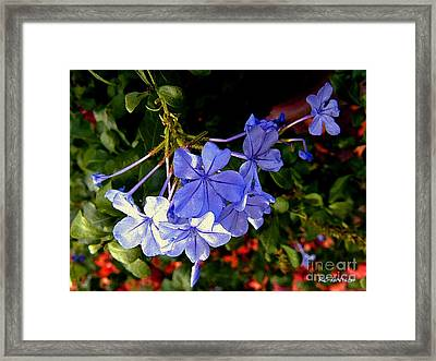 Sunlight On The Blues Framed Print by RC DeWinter