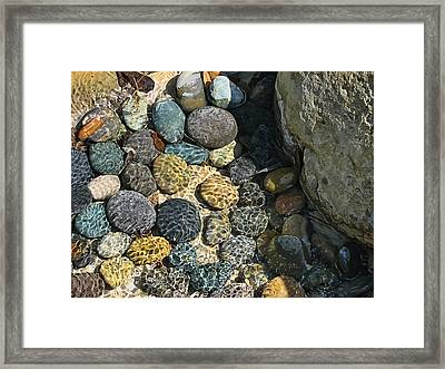 Sunlight On Wet Rocks Framed Print by Wendy J St Christopher