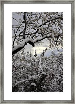Sunlight Peeking Through  Framed Print by Saija  Lehtonen