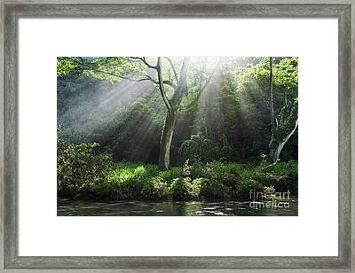 Sunlight Rays Through Trees Framed Print by M Swiet Productions