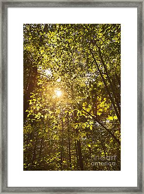 Sunlight Shining Through A Forest Canopy Framed Print by Jonathan Welch
