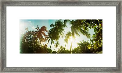 Sunlight Shining Through The Palm Framed Print by Panoramic Images