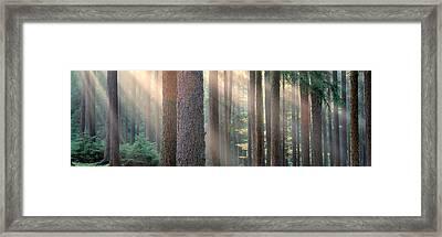 Sunlight Shining Through Trees Framed Print