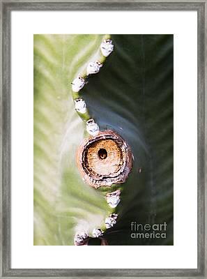 Sunlight Split On Cactus Knot Framed Print