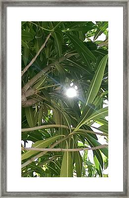 Sunlight Streaming Framed Print by Bill Mohler