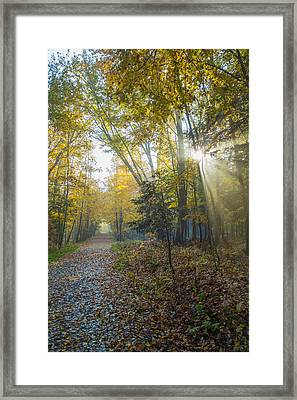 Sunlight Streaming Through The Trees Framed Print by Jacques Laurent