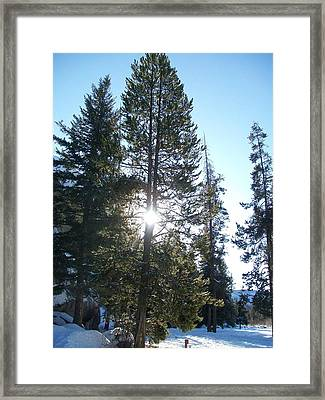 Sunlight Through A Tree Framed Print by Jewel Hengen