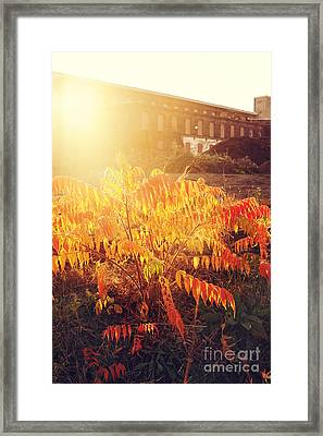 Sunlight Through The Ruin Framed Print by HD Connelly