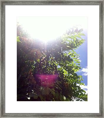 Framed Print featuring the photograph Sunlight Above The Trees by Alohi Fujimoto