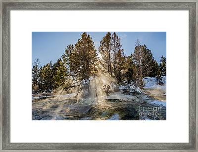 Sunlight Through The Trees Framed Print