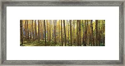 Sunlight Through Trees, Colorado Framed Print by Panoramic Images