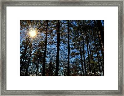 Framed Print featuring the photograph Sunlight Through Trees by Tara Potts