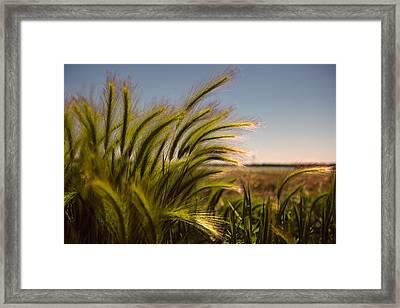 Sunlight Framed Print